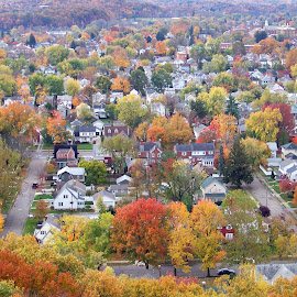 In The City by Philip Molyneux - City,  Street & Park  Neighborhoods ( fall leaves, landscape, aerial view, city, colored trees )