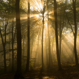 Rays in the forest by Peter Samuelsson - Landscapes Forests