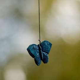 Wind Chim by Kenneth Rogers - Novices Only Objects & Still Life ( canon 6d, 50mm,  )