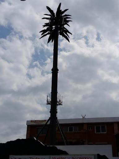 Palma Artificial