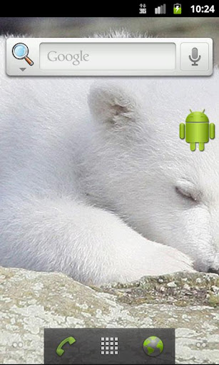 Polar bear Knut Live wallpaper