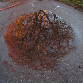 Reflections by Bryce Meyer - City,  Street & Park  Street Scenes ( water, reflection, tree, fall, street, puddle,  )