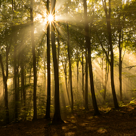 Rays by Peter Samuelsson - Nature Up Close Trees & Bushes