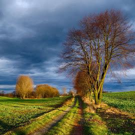 Way by Marek Koteluk - Landscapes Prairies, Meadows & Fields ( sky, hdr, opolskie, trees, way, poland )