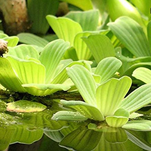 水生植物 書籍 LOGO-玩APPs