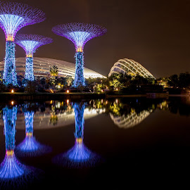 reflection by Renke Bargmann - City,  Street & Park  City Parks ( reflection, super trees, night, gardens by the bay, singapore )