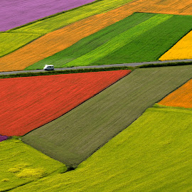 The fields by Fed  ® - Landscapes Prairies, Meadows & Fields ( car, horizontal, no person, road, castelluccio, sun, fields )