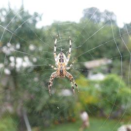 by Krzysztof Krasuski - Nature Up Close Webs
