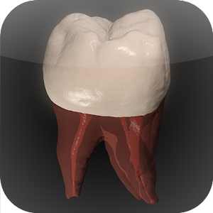 Real Tooth Morphology For PC / Windows 7/8/10 / Mac – Free Download