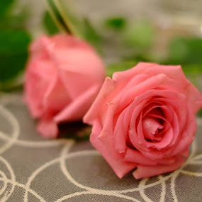 by Kitkat Katrina - Flowers Flower Buds ( , Flowers, Flower Arrangements )