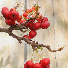 Berries by Arnaldo Ronca - Digital Art Things ( fruit, red, berries )