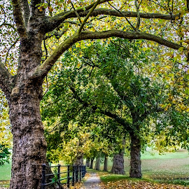 Royal Victoria Park, Bath by Charles Ong - City,  Street & Park  City Parks