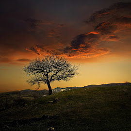 by Силвия Георгиева - Landscapes Sunsets & Sunrises ( field, clouds, tree, sunset, landscape )