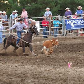 Cowboy 1 - Calf 0 by Dennis McClintock - Sports & Fitness Rodeo/Bull Riding ( cowboy, calf, rodeo, fair )