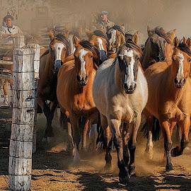 Cabaña El Sirigotede Rodolfo Becerra by Sergio Manes - Animals Horses