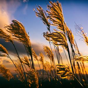 last sun ray_.jpg