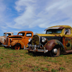 Three Amigos ! by Jan Siemucha - Transportation Automobiles ( trucks, sky, old trucks, grass, pickups )