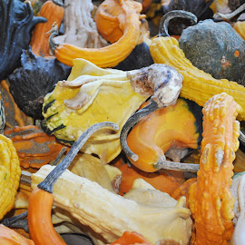 by Craig Patterson - Food & Drink Fruits & Vegetables ( fall, color, colorful, nature )