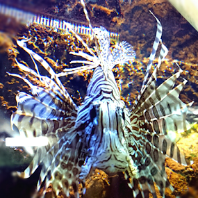 Underwater beauty by Mirna Abaffy - Animals Fish ( animals, android, zoo, underwater, fish, mobile photos, mobile )