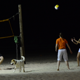Night Volleyball  by Rita Uriel - Sports & Fitness Other Sports ( playing, sand, sports, court, beach, net, dog, volleyball. ball people )