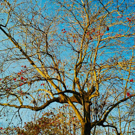 Miss U by Ophe Blacks - Nature Up Close Trees & Bushes ( tree, nature, bushes, trees, nature up close )