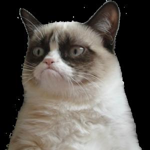 Cat Music Memes