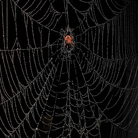 Ralphs Place by Paul Mays - Nature Up Close Webs