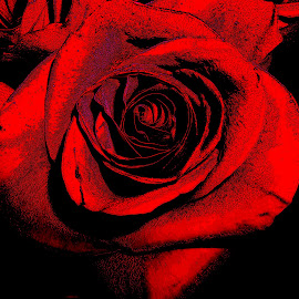 Rose by Esther Crystal - Digital Art Things