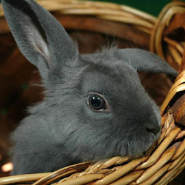 Bunny by Beth Kruskamp - Animals Other Mammals