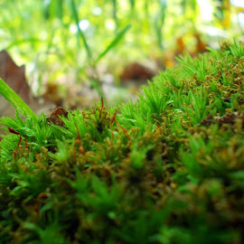 Green by Catalin Bcv - Nature Up Close Other plants
