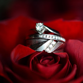 Platinum in a rose by Cheryl Portmann - Wedding Other ( rose, macro, wedding photography, macro photography, wedding rings )
