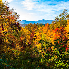 Fall Vista by Patrick Flood - Landscapes Mountains & Hills ( canon, photosbyflood, national park, yellows, fall colors, vista, tennessee, oranges, smoky mountains )
