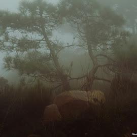 Anoitece em Sintra by Tânia Alves - Landscapes Weather ( nevoeiro, floresta, arvores, sintra, verde )