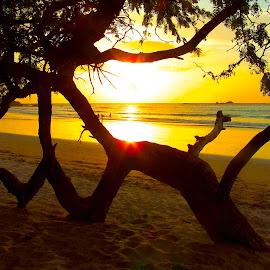 Tamarindo Beach Sunset by Donovan Twaddle - Landscapes Sunsets & Sunrises ( shore, sillhouette, sand, orange, waves, tamarindo, sea, beach, yellow, sun, tides, tree, sunset, costa rica, low tide, playa, branch, branches )