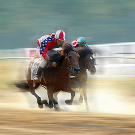 Speed by Vitor Guimarães - Sports & Fitness Other Sports ( victor guimarães, horses, speed, composition )