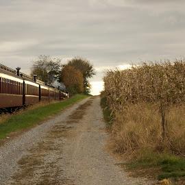 train through the farmland by Melissa Devine - Transportation Trains ( sunset, trail, farmland, train )