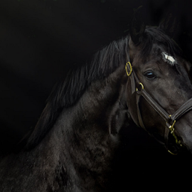 Alpha by Erik Kunddahl - Animals Horses ( mare, riding, equstrian, horse, equus )