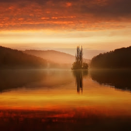 Alone by Ondrej Pakan - Landscapes Sunsets & Sunrises ( mirror, tree, forest, lake, lanscapes )