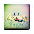 Aviary Effects: Toy Camera APK baixar