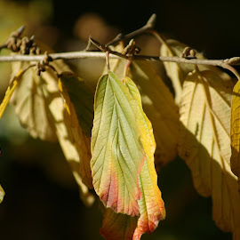 Fall Leaves by Terri Kvetko Gonzalez - Nature Up Close Leaves & Grasses ( fall leaves, nature, fall colors, plants, leaves )