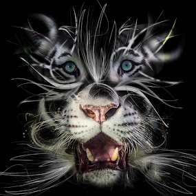 Conceptual Big Cat seven by Ken  Frischkorn - Digital Art Animals ( jaguar, big cats, animals, flames, tigers, conceptual, light, smoke )