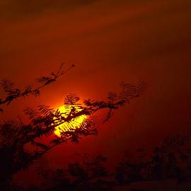 Red Morning by Asthadi Setyawan - Landscapes Sunsets & Sunrises ( Earth, Light, Landscapes, Views )