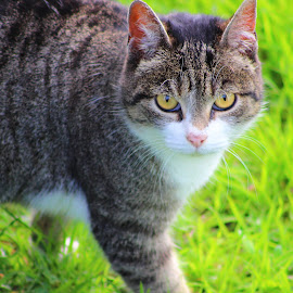 feline look by Tommaso Smyle - Animals - Cats Kittens