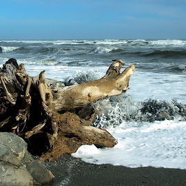 Driftwood. by Osija Anolak - Landscapes Beaches