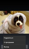 Screenshot of Funny pictures