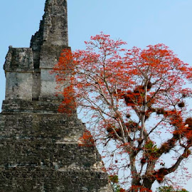Tikal, Guatemala by Tyrell Heaton - Instagram & Mobile iPhone ( guatemala, tikal, iphone )