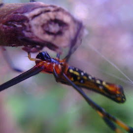 laba laba berwarna by Bebens Sahidi - Instagram & Mobile Android