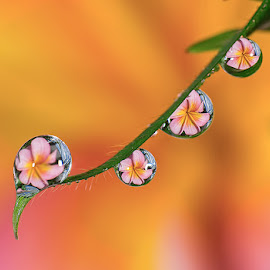 Morning pearls by Citra Hernadi - Nature Up Close Natural Waterdrops