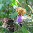 Butterflies, Bee and Beetle on Thistle