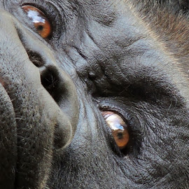 by Beverly Lane - Animals Other Mammals (  )
